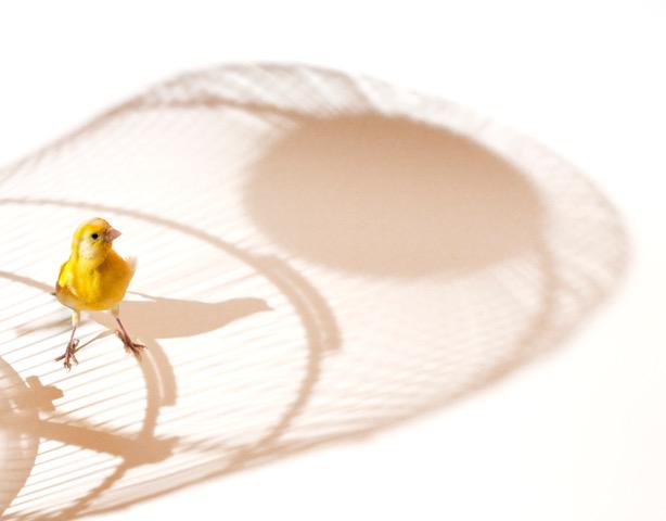 Oiseau dans une cage